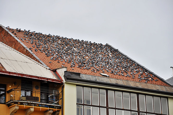 A2B Pest Control are able to install spikes to deter birds from roofs in Enfield.