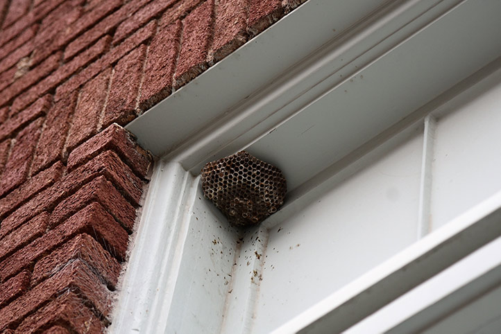 We provide a wasp nest removal service for domestic and commercial properties in Enfield.
